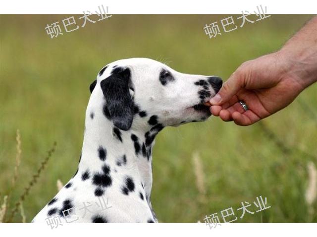 昆明訓犬收費多少 值得信賴 昆明頓巴訓犬訓犬師培訓供應