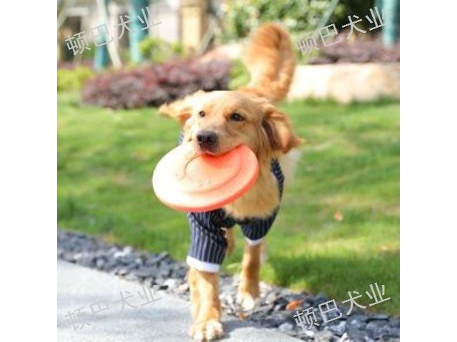 昆明宠物犬训练学费多少钱 欢迎咨询 昆明顿巴训犬训犬师培训供应
