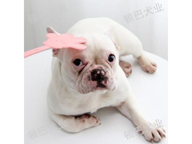 云南宠物犬训练哪家专业 客户至上 昆明顿巴训犬训犬师培训供应