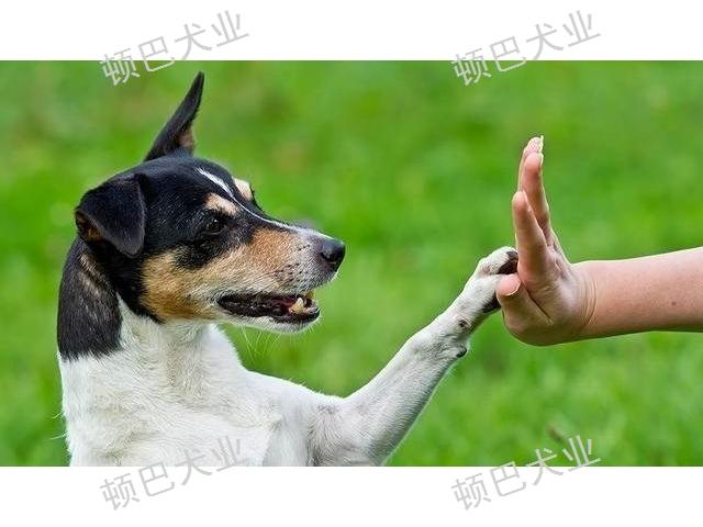 云南高級訓犬臥下 客戶至上 昆明頓巴訓犬訓犬師培訓供應