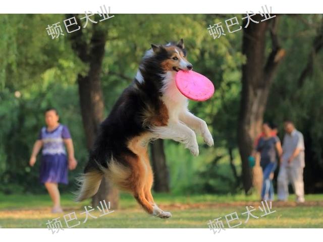 五华区职业训犬师培训基地 有口皆碑「昆明顿巴训犬训犬师培训供应」