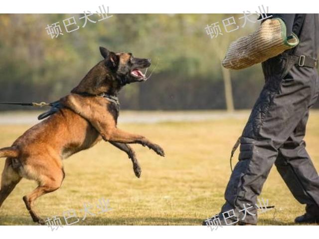 昆明周边职业训犬师培训怎么收费 欢迎来电 昆明顿巴训犬训犬师培训供应