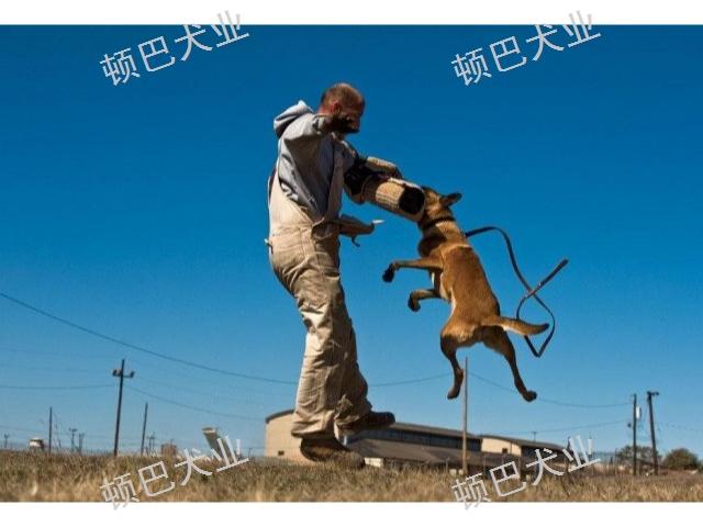 昆明高级训犬定点大小便 客户至上 昆明顿巴训犬训犬师培训供应