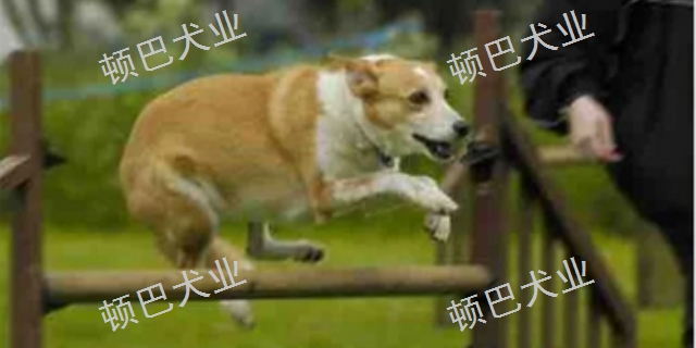 云南職業訓犬套餐 貼心服務「昆明頓巴訓犬訓犬師培訓供應」