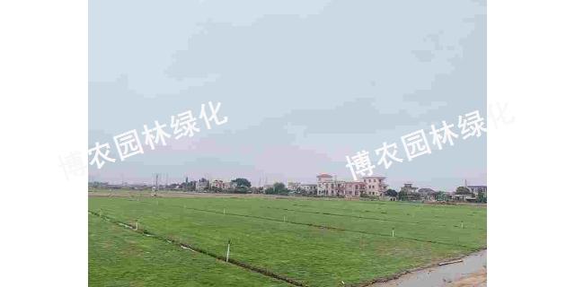 湖北別墅草坪養護 歡迎咨詢「廣東博農園林綠化工程供應」