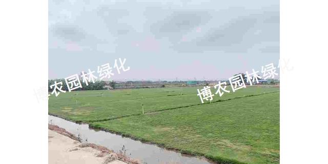 浙江綠色草坪種植公司 歡迎來電「廣東博農園林綠化工程供應」