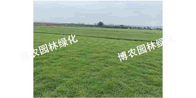 宁夏足球场草坪批发 欢迎咨询「广东博农园林绿化工程供应」