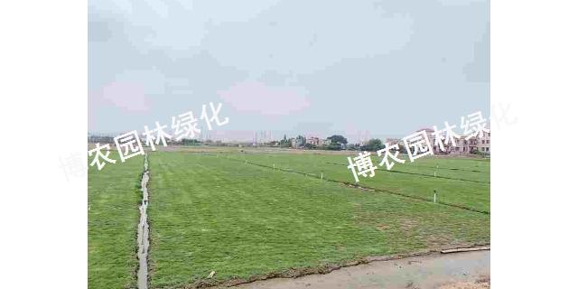 寧夏景觀草坪批發 歡迎咨詢「廣東博農園林綠化工程供應」