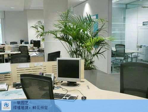 常熟优质绿植租赁供应商家 欢迎咨询「苏州鲍氏企业管理咨询服务供应」