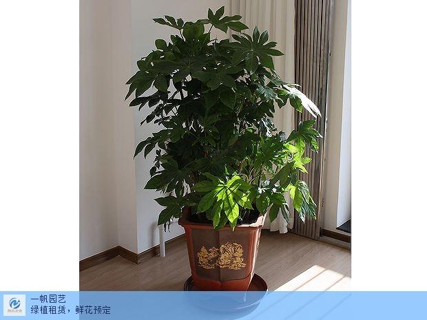 上海新款绿植租摆特价 值得信赖「苏州鲍氏企业管理咨询服务供应」