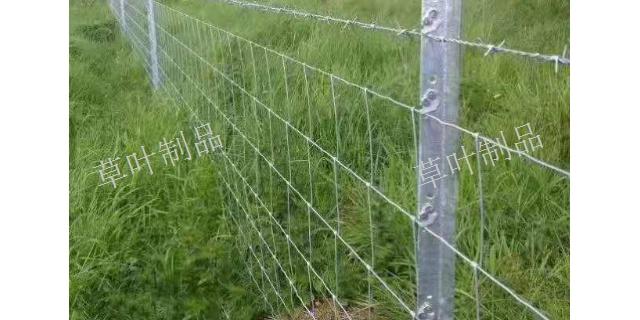 新疆过塑刺丝价格 新疆草叶金属制品供应