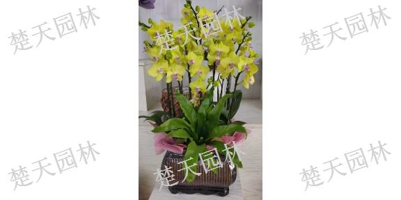 徐州好养盆景花瓶,盆景