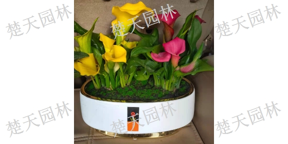 嘉定区绿植鲜花怎么种植好,鲜花