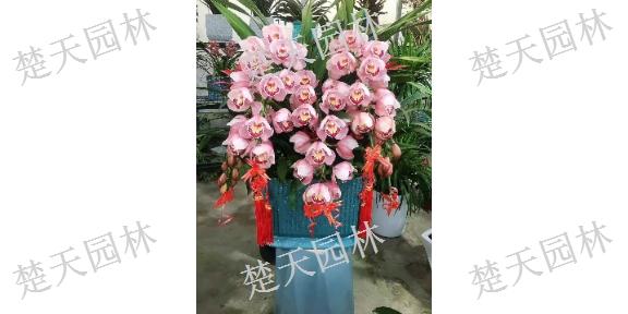 张家港鲜花盆器,鲜花