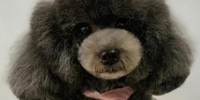 芜湖宠物店加盟费用,宠物