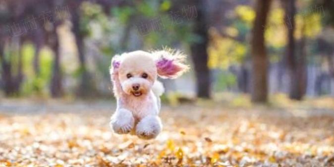 温州宠物店加盟哪家好 诚信为本「江苏迪耐宠物用品供应」