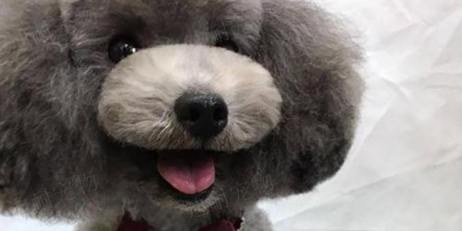 泰州宠物代理加盟店 诚信为本「江苏迪耐宠物用品供应」