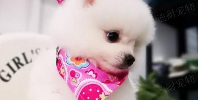 杭州宠物店加盟 服务为先「江苏迪耐宠物用品供应」