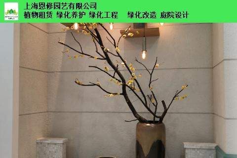 昆山广场绿化租赁 诚信互利「上海恩修园艺供应」