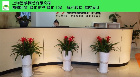 昆山耐寒宿根花卉 欢迎来电「上海恩修园艺供应」