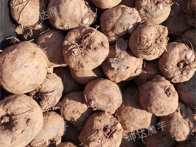 铜梁区二代魔芋种子价格「云南坤达魔芋种子批发供应」