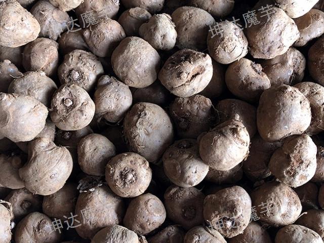 曲靖魔芋种子原产地直销 云南坤达魔芋种子批发供应
