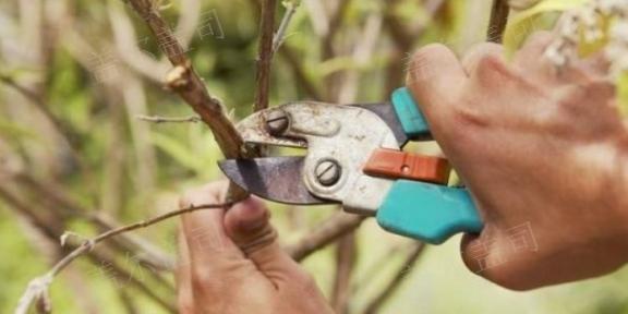 四川正规有机肥制造商 和谐共赢「盖尔盖司供」
