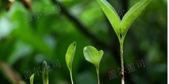 中國澳門口碑好生物菌肥市場報價 值得信賴「蓋爾蓋司供」