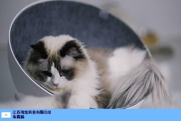 宿迁正规猫舍赚钱是不是很容易 服务为先 江苏淘宠科技供应