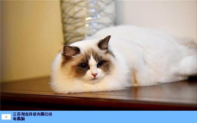 南通如何开家猫舍的猫