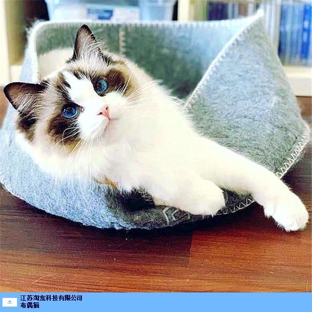 徐州猫舍赚钱吗