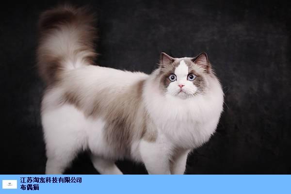 南通猫舍需要投资多少钱 江苏淘宠科技供应