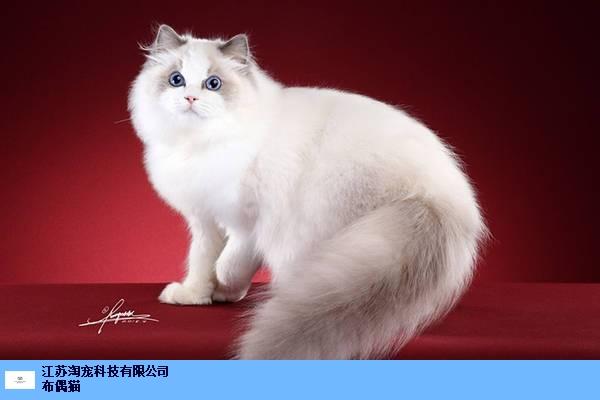 惠山区开家猫舍赚钱是不是很容易 创新服务 江苏淘宠科技供应