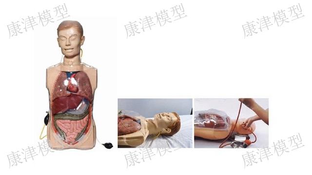 安徽新生兒護理模型
