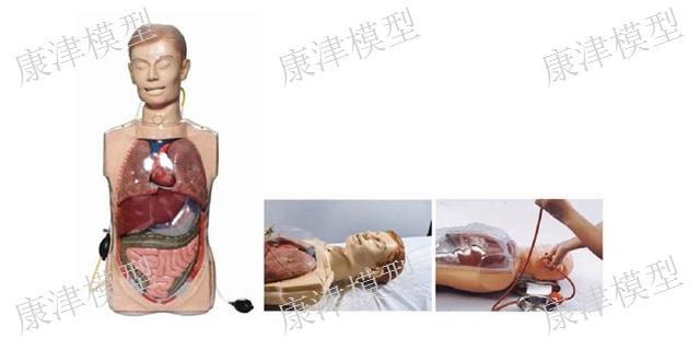浙江成人护理模型厂家「康津供」
