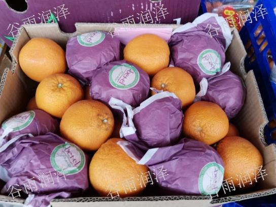 兰陵县大批量水果批发商找哪家,果