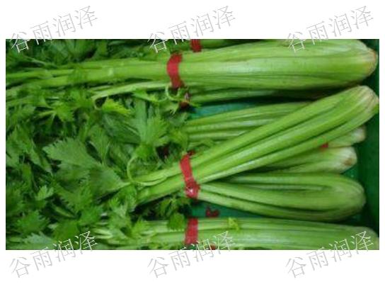 临沂苍山蔬菜批发配送,蔬菜