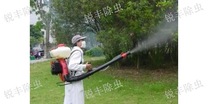 安徽蟑螂蟻巢,蟑螂