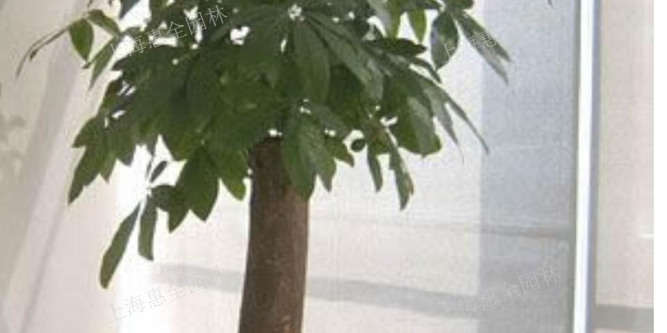 浦东新区绿植租赁售后服务 服务至上「上海惠全园林绿化工程供应」