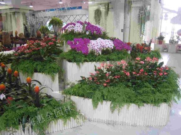 上海绿植养殖 欢迎咨询「上海惠全园林绿化工程供应」