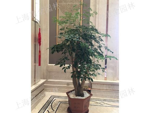 长宁办公室绿植养护 欢迎咨询「上海惠全园林绿化工程供应」