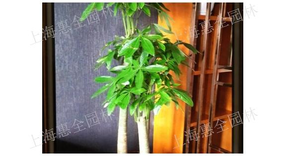 黄浦室内绿植摆放 欢迎咨询「上海惠全园林绿化工程供应」