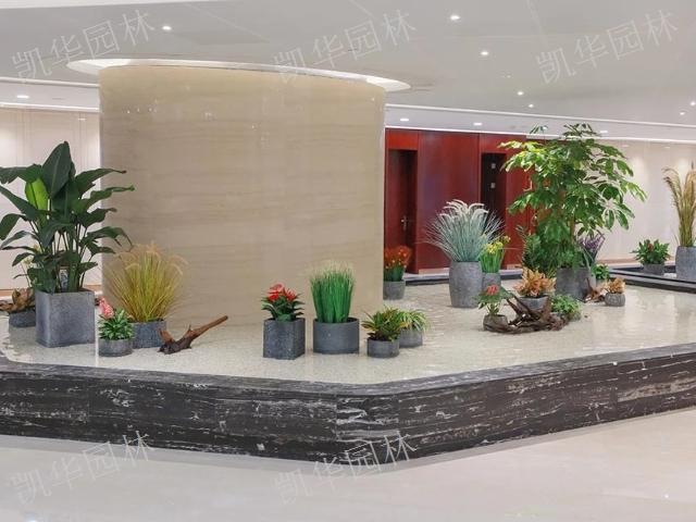 外高桥会所绿植租摆标准 欢迎来电「上海凯华园林绿化工程供应」