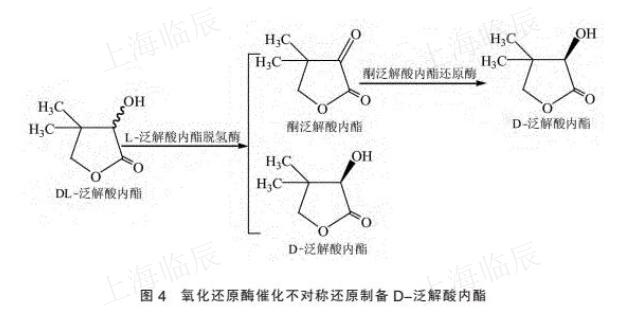食品级泛解酸内酯发酵 上海临辰供应