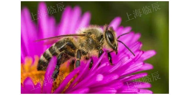 山西蜂毒,蜂毒