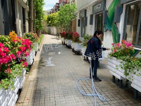 上海秋季园林养护比较「上海绿通花卉园艺供应」