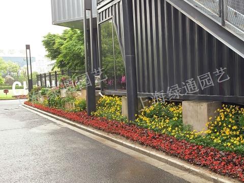 四川夏季園林養護指南「上海綠通花卉園藝供應」