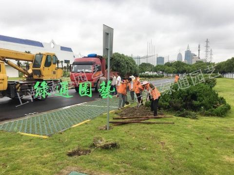杭州大型绿化工程,绿化工程