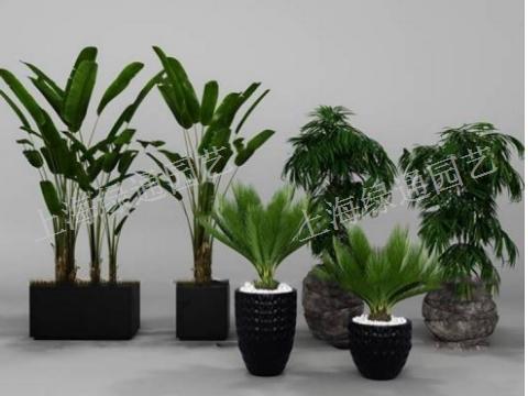 舟山鲜切花花卉销售网站「上海绿通花卉园艺供应」