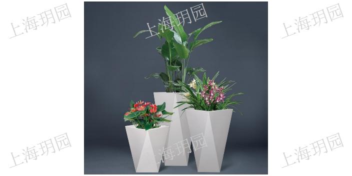 闵行区室内 绿植「上海玥园实业供应」